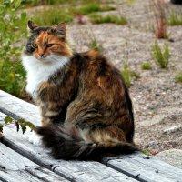 Прекрасная половина ...кошачьих )) :: Маry ...
