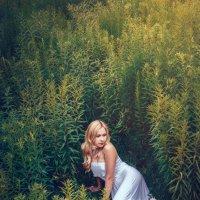 В высокой траве :: Наталья