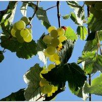 Солнечные ягоды... :: Тамара (st.tamara)