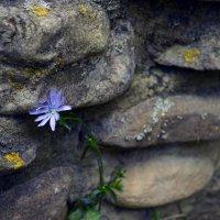 жизнь в камнях :: Lisa ...