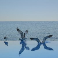 Чайки. :: Larisa
