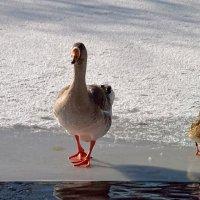 Пойдем,поплаваем! :: Наталья