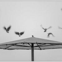 Летите, голуби... :: Борис Аарон