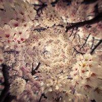 桜 :: Slava Hamamoto