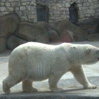 московский зоопарк :: Оксана Браковенко