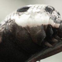 Гусеница :: Денис Матвеев