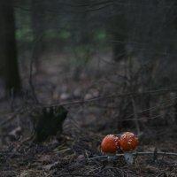 Дремучий лес, дремучие обитатели :: Илья Курзаев