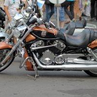 Дни Harley Davidson в Санк-Петербурге 2014 :: Sasha Bobkov