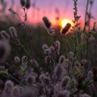 В лучах закатного солнца :: Александр Крупский