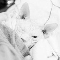 Нам холодно, мы спим. Но бдим исправно... :: Дмитрий Тихомиров