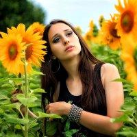Цветы солнца :: Serg Y
