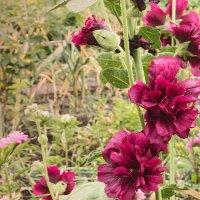 Цветы :: Альбина Кабик