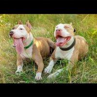 Собачья семейка :: Лариса Булавка
