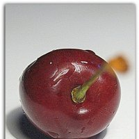 Lonely cherry :: A. SMIRNOV