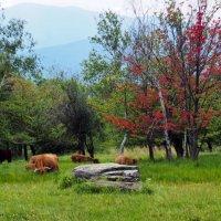 Stowe, Vermont :: Vadim Raskin