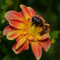 встреча на цветке :: Наталья Калинина