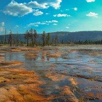 Yellowstone National Park. :: Gene Brumer