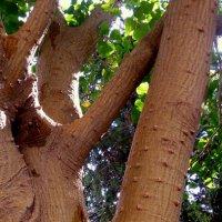Шипы кораллового дерева :: Марк