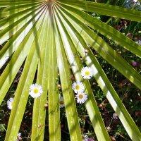 цветы :: Наталья