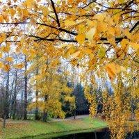 Золотая царскосельская осень :: Ирина Фирсова