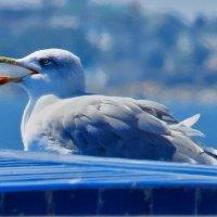 жара - птичке пить хочется :: Валерий Дворников