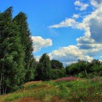 Вспоминая летний ветерок... :: Лесо-Вед (Баранов)