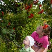 Самые вкусные ягоды... там. :))) :: Александр Никитинский