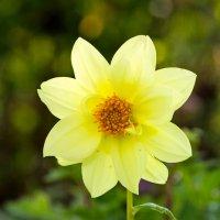 Цветок Преображения :: Павел Белоус