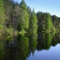 Зеленый берег :: Нэля Лысенко