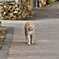 Одинокий странник- из серии кошки очарование моё :: Shmual Hava Retro