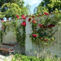 Розы в Праге :: Наиля
