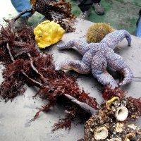 Обитатели океана. :: Анастасия Самигуллина