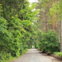 мой лес :: Наташа Шамаева