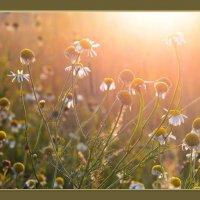 Новый день по полям разливается... :: Тамара Бучарская