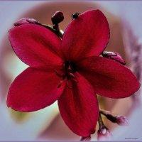 Ботаник :: Shmual Hava Retro