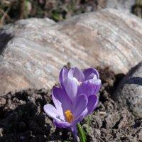порывы весны :: ксения карпунина