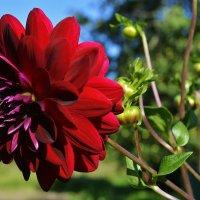 Цветок :: MEXAHNK НИКОНОВ
