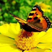 Бабочка :: MEXAHNK НИКОНОВ