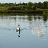 На Городищенском озере :: demyanikita