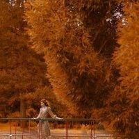 Золотая осень :: Женя Рыжов