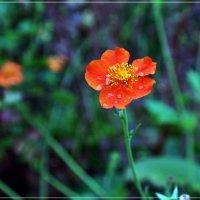 Аленький цветочек :: muh5257