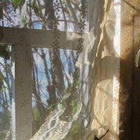 Муха в паутине за окном жужжит... :: Галина Стрельченя