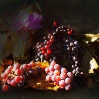 Солнце и виноград. :: Елена Прихожай