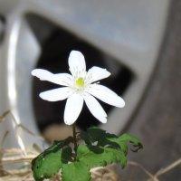 Нежность цветка :: Марике Марике