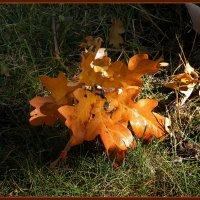 Листья желтые... :: Владимир Секерко