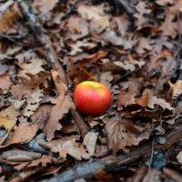Подарок осеннего леса :: Ольга Голубева