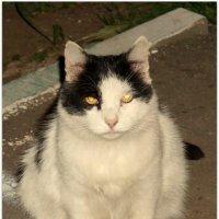 Соседский кот :: Elena Izotova