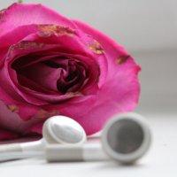 Красивая Музыка... :: Татьяна