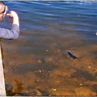 Разговор с рыбкой :: Natalia Mihailova