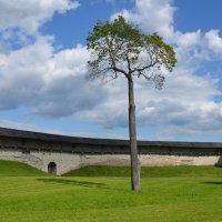Дерево :: demyanikita